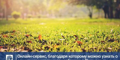 Новый онлайн-сервис на РПГУ МО